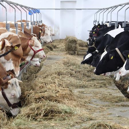 Farming Feed Storage