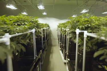 Indoor Cultivation