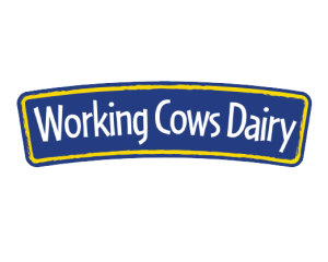 Working Cows Dairy