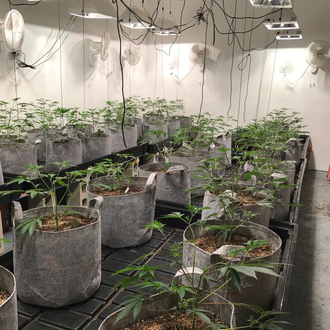 Seedlings in a PermaTherm Grow Room